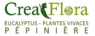 Crea Flora  pepiniere Eucalyptus Plantes vivaces